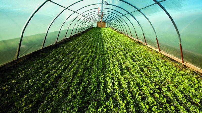 معلومات عن البيوت المحمية الزراعية